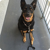 Adopt A Pet :: Tabitha - San Diego, CA