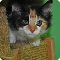 Adopt A Pet :: Ashland - Suwanee, GA