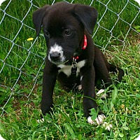 Adopt A Pet :: Stark - New Oxford, PA