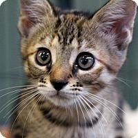 Adopt A Pet :: Tinkerbell - Sarasota, FL