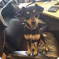 Adopt A Pet :: Nena - Vancouver, BC