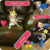 Dachshund Mix Dog for adoption in LAKEWOOD, California - Princess