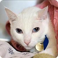Adopt A Pet :: Angelina - San Luis Obispo, CA