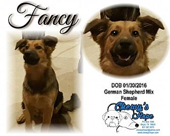 German Shepherd Dog Mix Dog for adoption in Boyd, Texas - Fancy