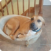 Adopt A Pet :: Perry - waterbury, CT