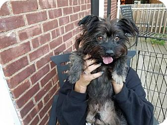 Terrier (Unknown Type, Medium) Mix Dog for adoption in Tenafly, New Jersey - Romeo