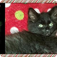 """Adopt A Pet :: JAZZI """"CHAZZI"""" - Winterville, NC"""