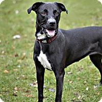 Adopt A Pet :: Lettie - Midland, MI