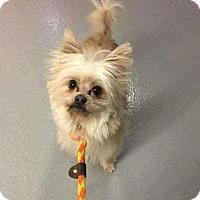 Adopt A Pet :: Lady - Plainfield, IL