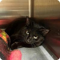 Adopt A Pet :: Friday - Minerva, OH