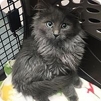 Adopt A Pet :: Soda Pop DUO ONLY - Mount Laurel, NJ