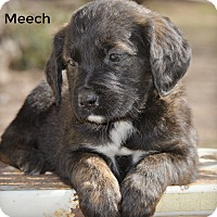 Adopt A Pet :: Meech~adopted! - Glastonbury, CT