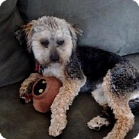 Adopt A Pet :: Nora - Denver, CO