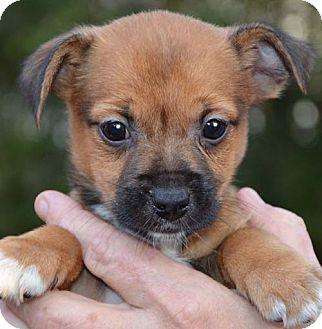 Dog Adoption Londonderry Nh