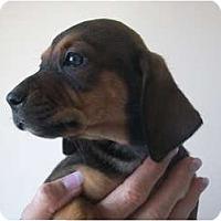 Adopt A Pet :: Cheryl - Albany, NY