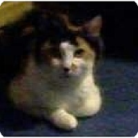 Adopt A Pet :: Sybil - Portland, ME