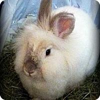 Adopt A Pet :: Belle Tout Seul - Williston, FL