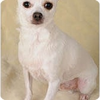 Adopt A Pet :: Dylan - Johnsburg, IL
