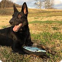 Adopt A Pet :: Kira - Thompson's Station, TN