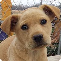 Adopt A Pet :: Twix AD 03-26-16 - Preston, CT