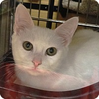 Adopt A Pet :: ASPEN - Diamond Bar, CA