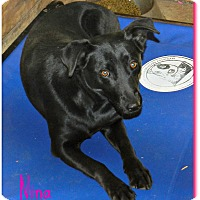 Adopt A Pet :: Nina - Lawrenceburg, TN