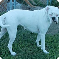 Adopt A Pet :: Gypsy - Salem, NH