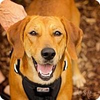 Adopt A Pet :: Sammie - Springfield, MO