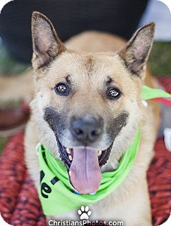 German Shepherd Dog Mix Dog for adoption in Los Angeles, California - Maximillion