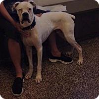 Adopt A Pet :: Wrigley - Salisbury, NC