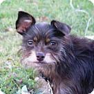 Adopt A Pet :: Marley