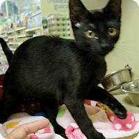 Adopt A Pet :: Eenie - Georgetown, TX