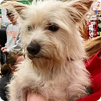 Adopt A Pet :: Pistol Pete - Pulaski, TN
