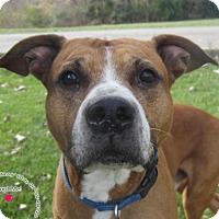 Adopt A Pet :: Happy - Sidney, OH
