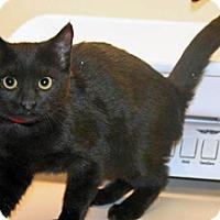 Adopt A Pet :: Suzie Q - Wildomar, CA