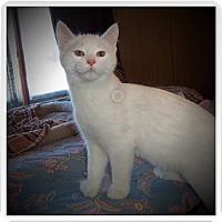 Adopt A Pet :: MIU - Medford, WI