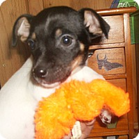 Adopt A Pet :: Yody-B - Lonedell, MO