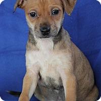 Adopt A Pet :: Milly - Yuba City, CA