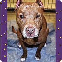 Adopt A Pet :: Tasha - San Jacinto, CA