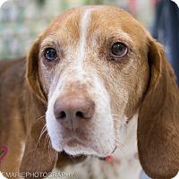 Adopt A Pet :: Barney - Grand Rapids, MI