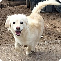 Adopt A Pet :: **SHELBY - Peralta, NM
