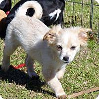 Adopt A Pet :: Dean/pending - Anderson, SC