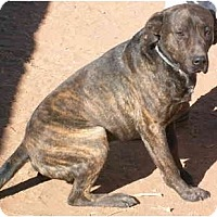 Adopt A Pet :: Zeus - Anton, TX