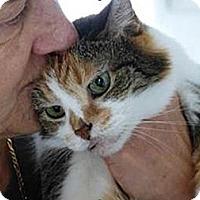 Adopt A Pet :: Josie - Cincinnati, OH