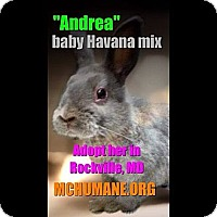 Adopt A Pet :: Andrea - Rockville, MD