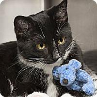 Adopt A Pet :: Madonna - Lombard, IL