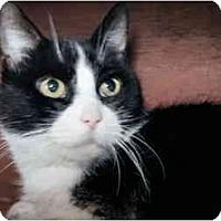 Adopt A Pet :: Jenga - Xenia, OH