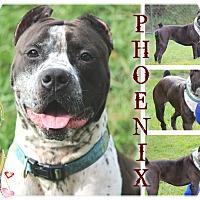 Adopt A Pet :: Phoenix - Tampa, FL