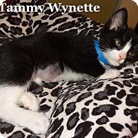 Adopt A Pet :: Tammy Wynette - Bentonville, AR