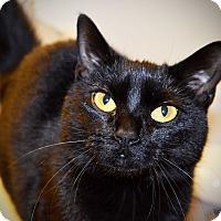 Adopt A Pet :: Carmen - Xenia, OH
